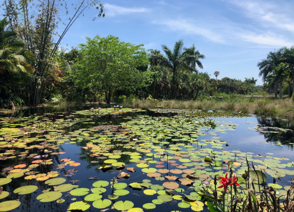 A picture of a lily pond.